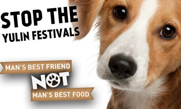 Yulin Köpek Festivali'ne ünlü tepki!